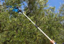 recensione migliori abbacchiatori per olive